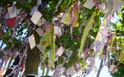 Wish Tree on Texel